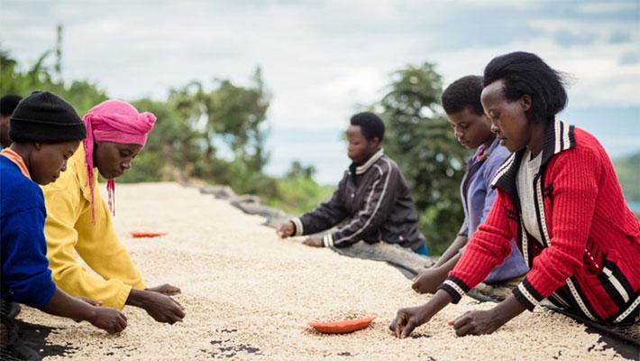 Gosling Coffee Rwanda Gosling Coffee